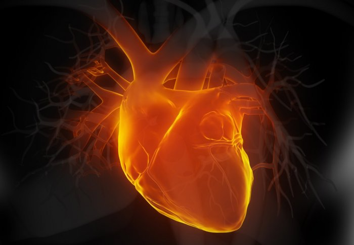 HEART AND MEDICINES