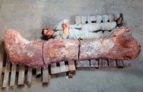 உலகின் மிகப்பெரிய டைனோசரின் எலும்புகள் அர்ஜென்டினாவில் கண்டுபிடிப்பு- 7 மாடி உயரம், 77 டன் எடை