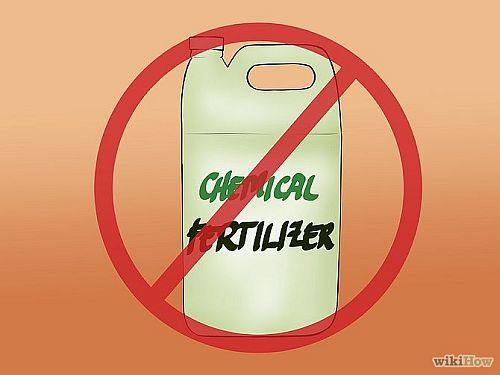No chemical fertilizers